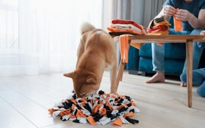 Canine Enrichment: How to Keep Your Dogs Busy When You Go Back to Work